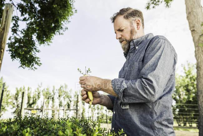 Wissenschaftler untersuchen Sämling Pflanze Wachstum Forschungszentrums — Stockfoto