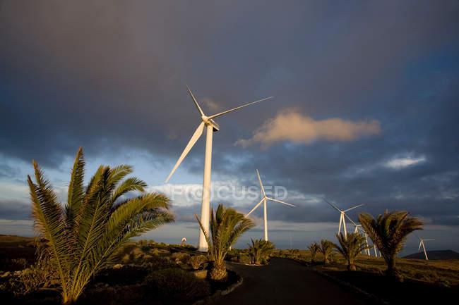 Ветер турбины и ладони под пасмурным небом — стоковое фото