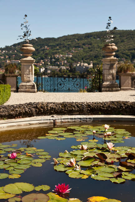 Lily pads in ornate fountain, piedmont, italy — Stock Photo