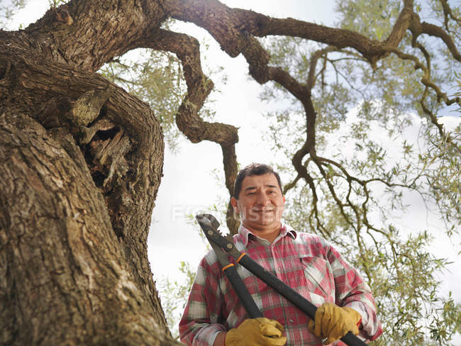 Man holding secateur next to olive tree — Stock Photo