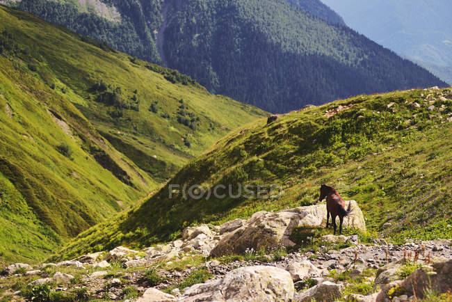 Кінь на скелястому оголення, Ushba гори, Кавказ, Сванеті, штат Джорджія, США — стокове фото