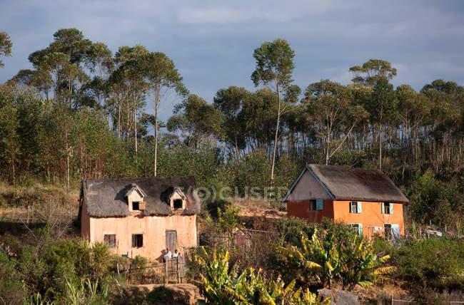 Малые жилые дома и деревья в солнечном свете — стоковое фото
