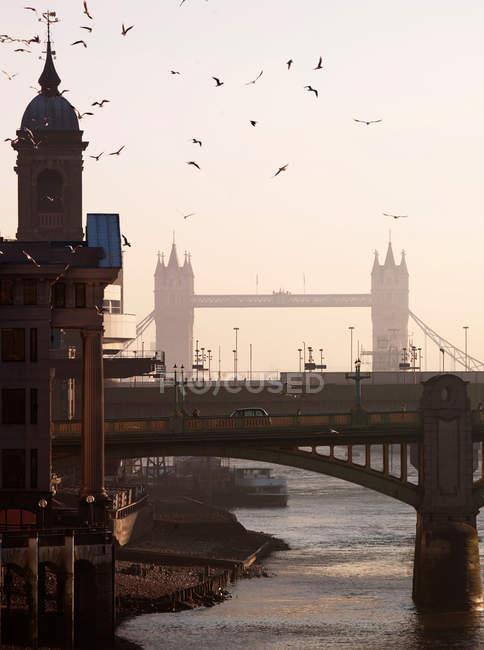 Птахи літають над річкою Темза під час відливу — стокове фото