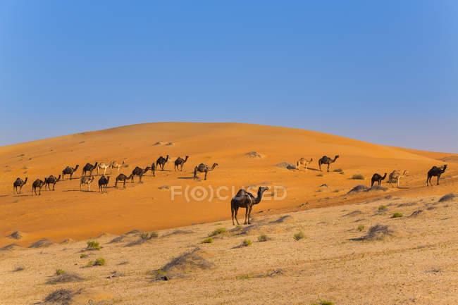 Rub al-Khali desert, empty quarter, Liwa desert, United Arab Emirates — Stock Photo