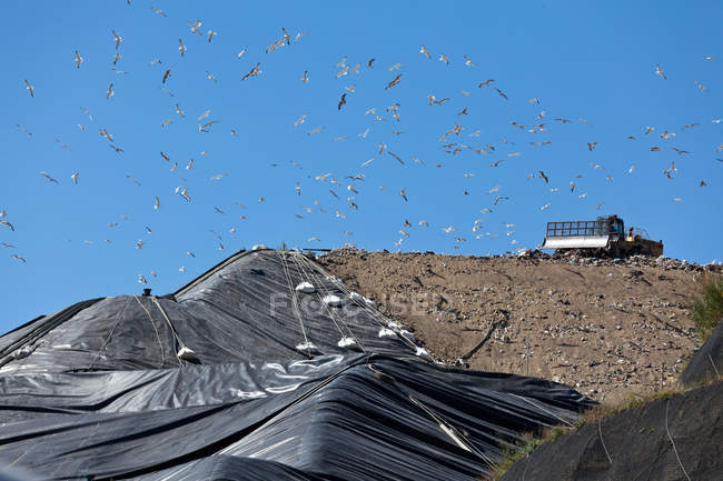 Pássaros voando sobre máquinas em aterro sanitário — Fotografia de Stock