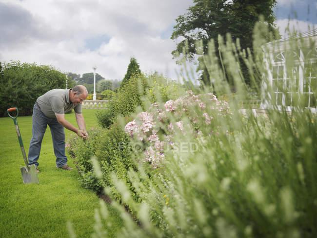 Fronteira de tendendo de jardineiro no jardim — Fotografia de Stock