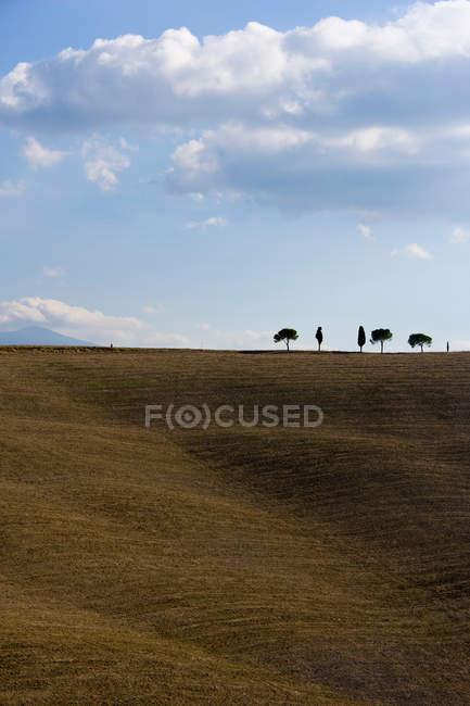 Голые поля с кипарисами — стоковое фото