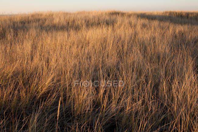 Escena pacífica con hermosa pradera marina al atardecer de verano - foto de stock