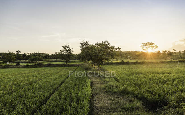 Green field landscape at sunset, diminishing view — Stock Photo