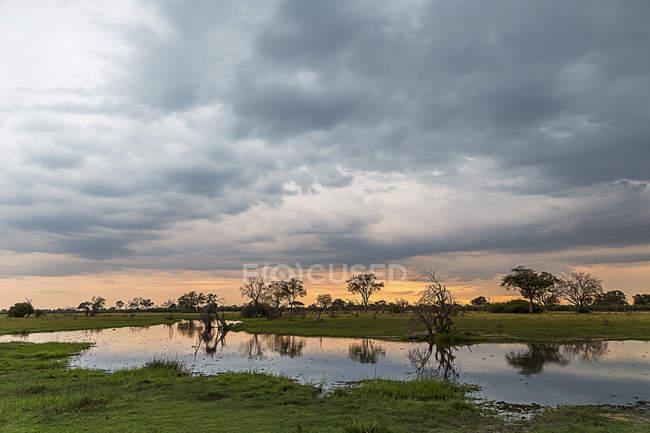 Silhueta de árvores e pântano, Delta do Okavango, Parque Nacional de Chobe, Botswana, África — Fotografia de Stock