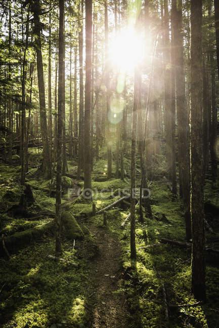 Stawamus Chief Provincial Park, Squamish, British Columbia, Canadá — Fotografia de Stock