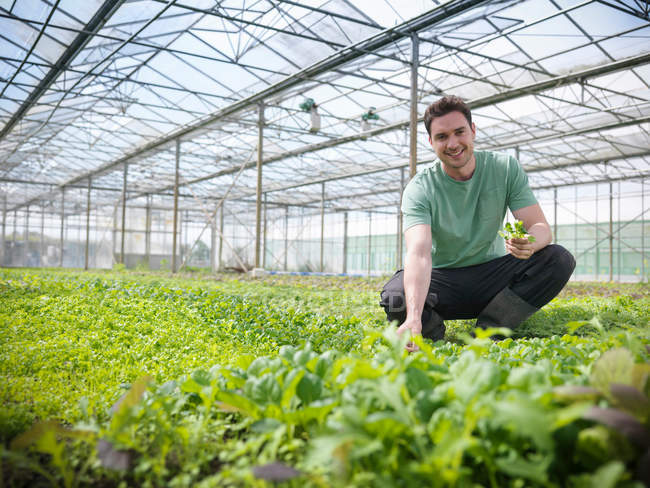 Worker in greenhouse crouching to inspect salad crops, portrait — Stock Photo