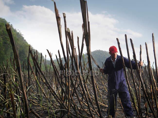 Trabalhador de corte de cana de açúcar queimada — Fotografia de Stock
