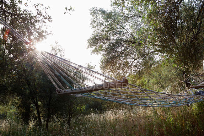 Hammock hanging in green growth with backlit — Stock Photo