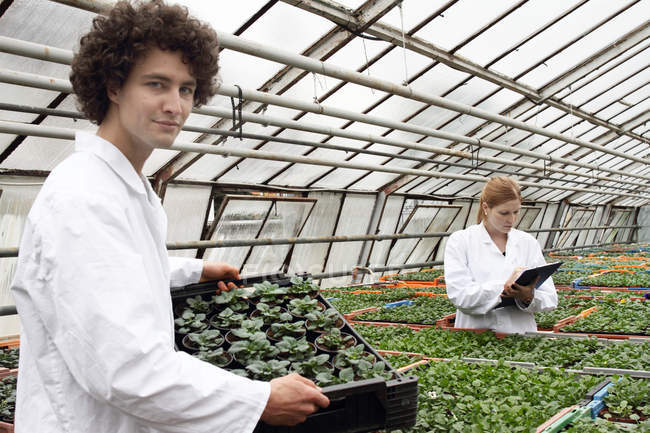 Horticulturists working together in greenhouse — Stock Photo