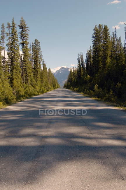 Empty road to mountains with forests — Stock Photo