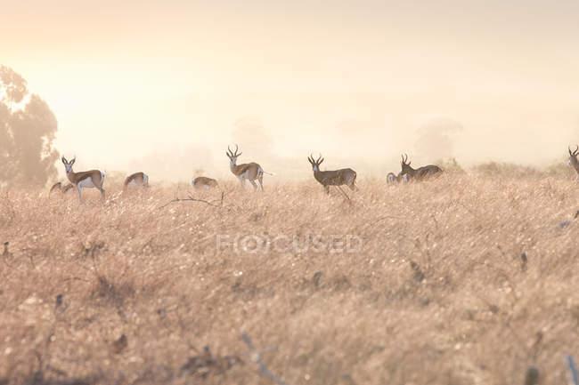 Живописный вид сафари дикой природы, Стелленбос, Южная Африка — стоковое фото