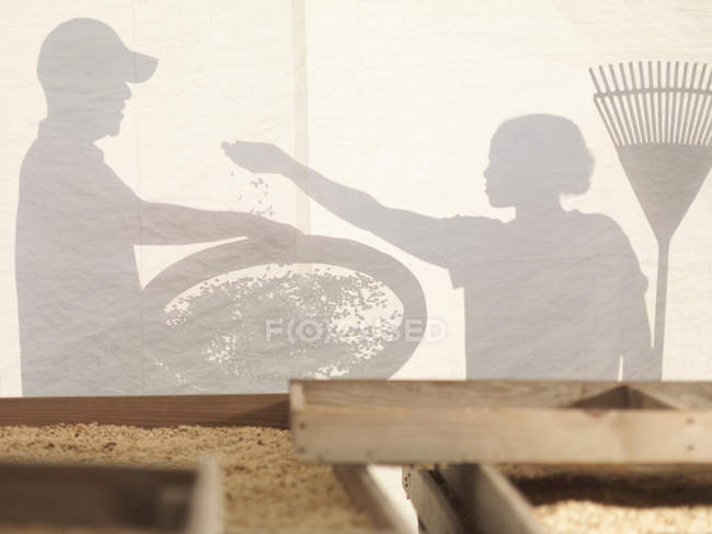 Man And Woman Processing Coffee Beans — Stock Photo