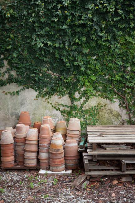 Terracota vasos de plantas por parede com hera — Fotografia de Stock