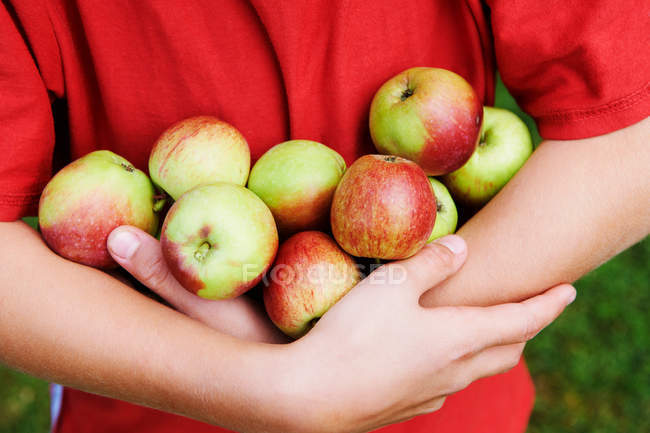 Cropped image of Child carrying ripe apples in hands — Stock Photo