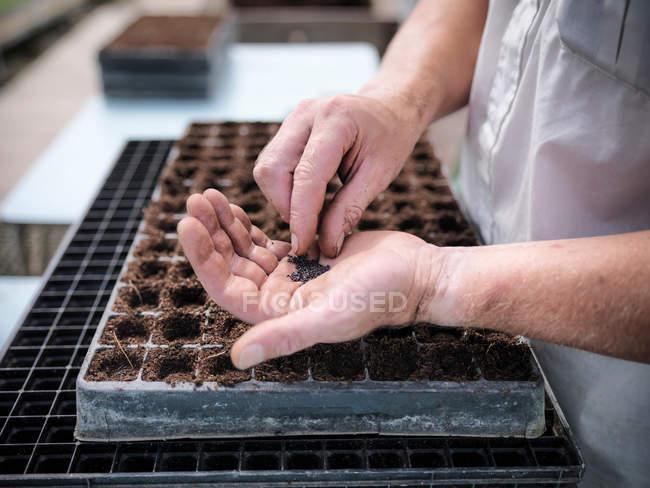 Vista ravvicinata del lavoratore nelle piantagioni di sementi in serra — Foto stock