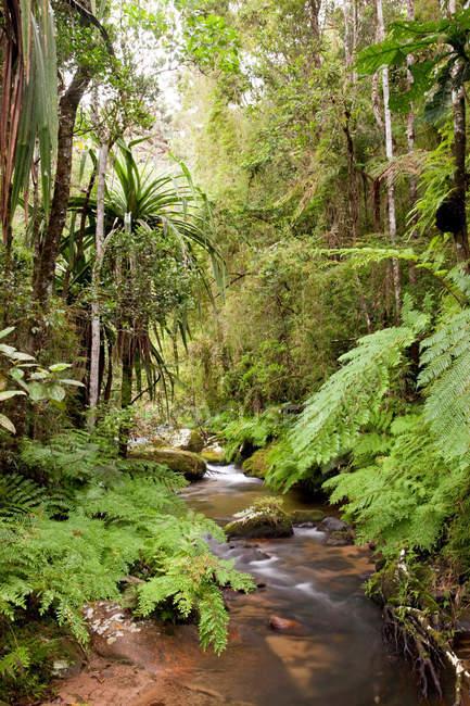 Fluss fließt durch den Dschungel — Stockfoto