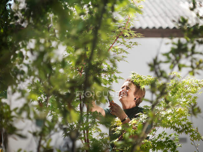 Femmina giardiniere cura piante — Foto stock