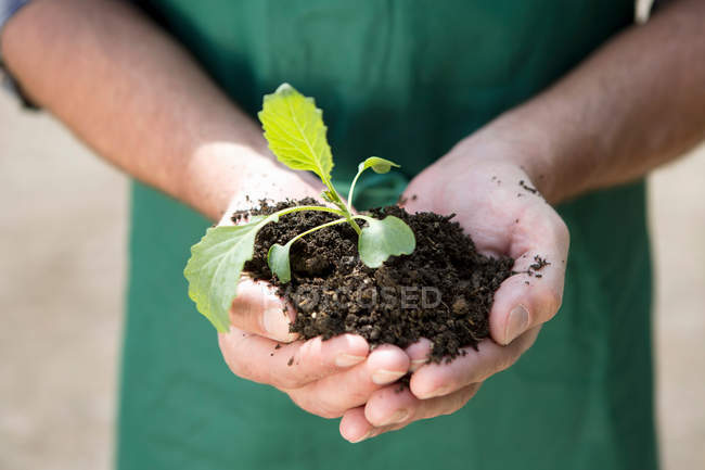 Close up of organic farmer holding seedling — Stock Photo