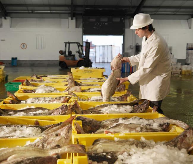 Працівник обробка риби ринку — стокове фото