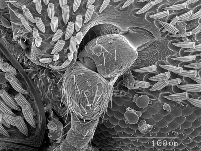 Scanning electron micrograph of beetle head — Stock Photo