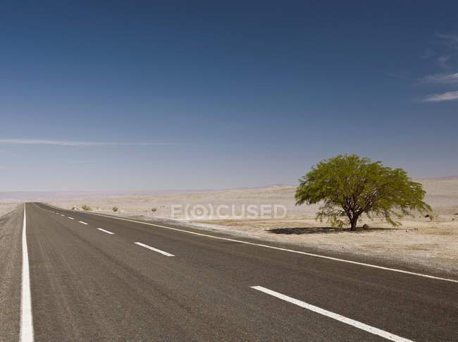 Einsamer Baum neben Straße in der Wüste — Stockfoto