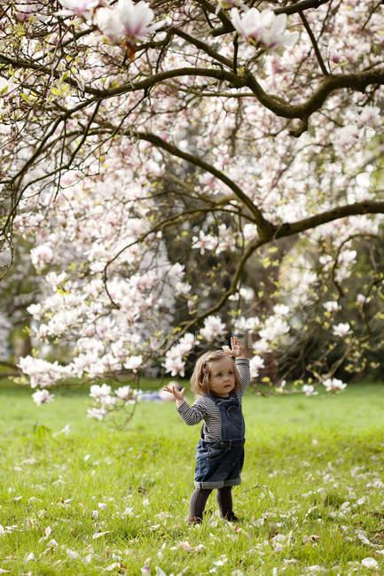 Дівчинка стоїть під деревом вишні — стокове фото