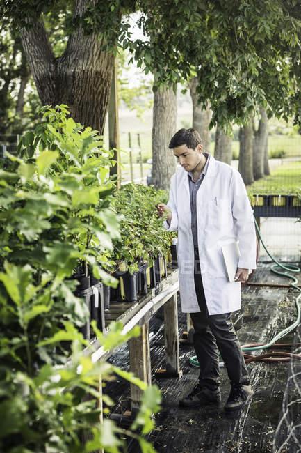 Wissenschaftler mit Laptop untersuchen Pflanzen an Pflanze Wachstum Forschungseinrichtung — Stockfoto