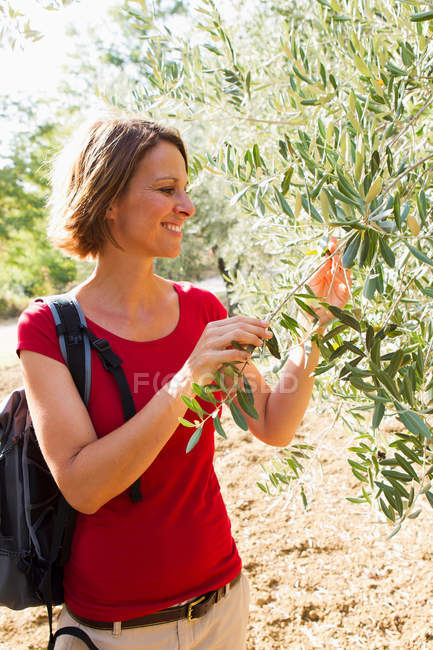 Woman touching olive tree — Stock Photo
