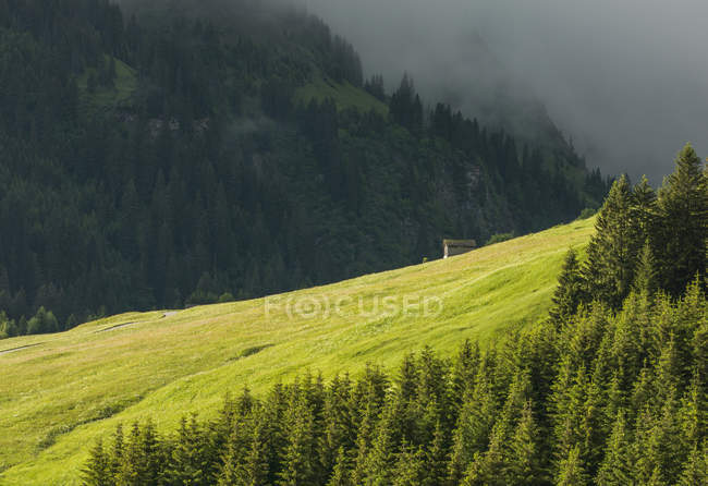 Distant house in alpine sun lighted meadow — Stock Photo