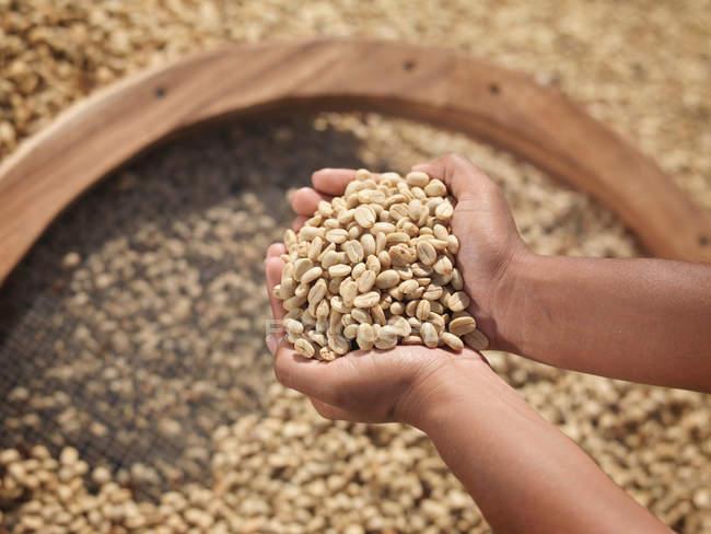 Vista superior de Manos sosteniendo granos de café - foto de stock
