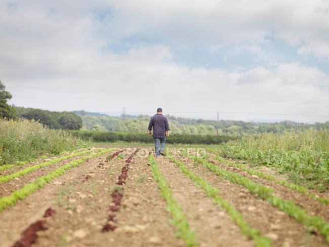 Farmer Walking In Crop Field Back View — Stockfoto