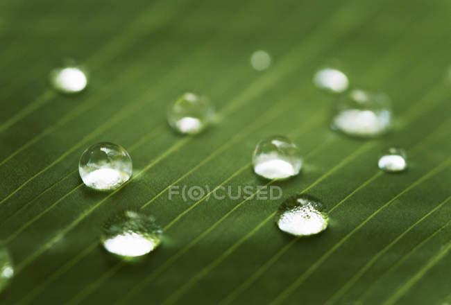 Капли воды на листьях — стоковое фото