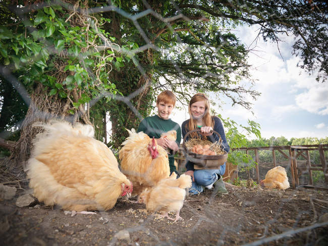 Portrait of two children collecting eggs with hens and chicks on farm, view through metal mesh fence — Stock Photo