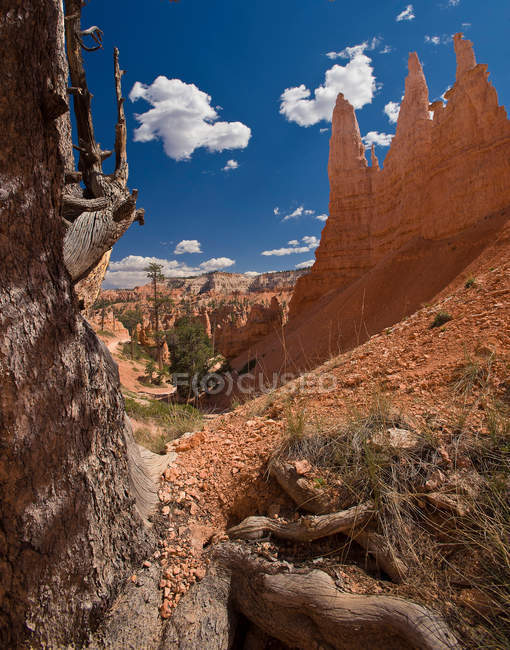 View of Bryce Canyon — Stock Photo