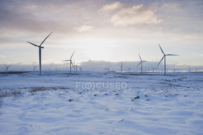 Wind turbines on sandy landscape with cloudy sky — Stock Photo
