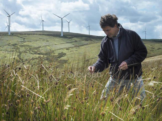 Еколог оглядає траву на винній фермі — стокове фото
