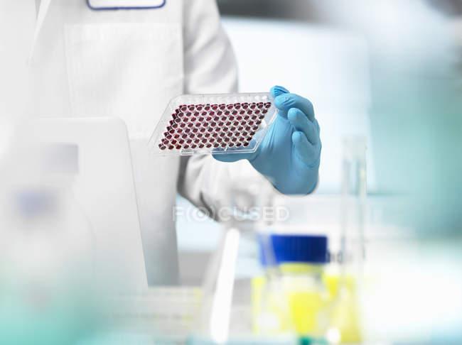 Scientifique, préparation des échantillons de sang dans une assiette bien multi pour les essais cliniques dans un laboratoire — Photo de stock