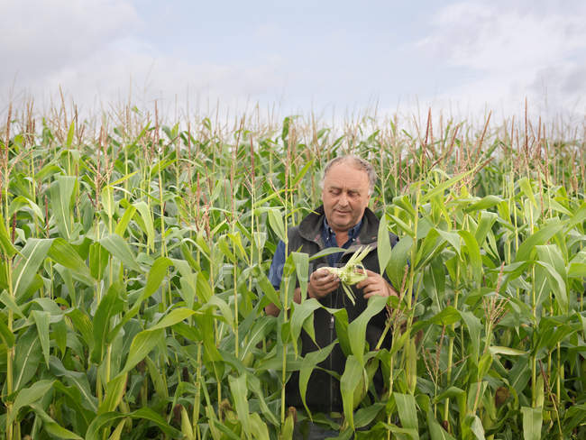 Farmer In Crop Field — Stock Photo
