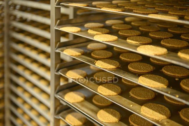 Bandejas de galletas recién horneadas en la fábrica de alimentos - foto de stock