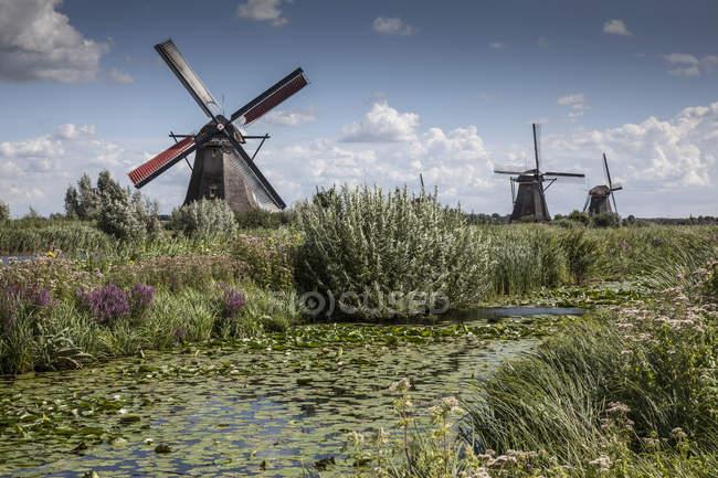 Molinos de viento y pantano del canal, Kinderdijk, Países Bajos - foto de stock