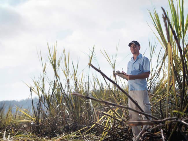 Homem com prancheta em cana de açúcar — Fotografia de Stock