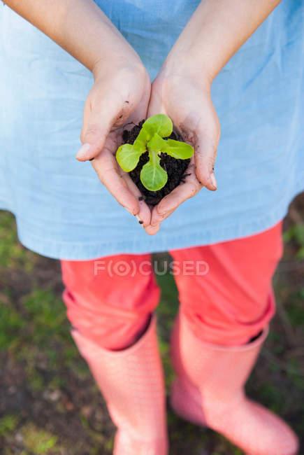 Женщина держит росток в грязи — стоковое фото