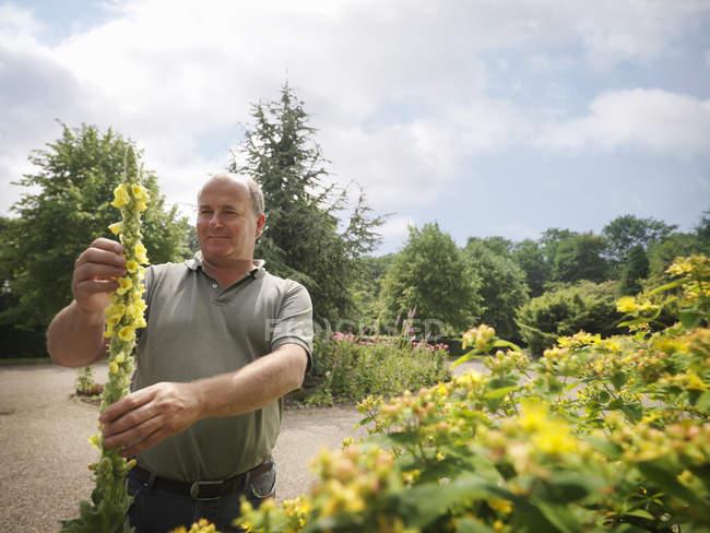 Jardineiro, inspecionando as flores amarelas — Fotografia de Stock
