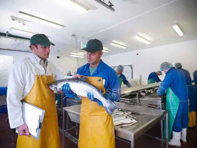 Менеджер і співробітники обговорити виробнича лінія рука вирощували шотландської ферми лосося — стокове фото